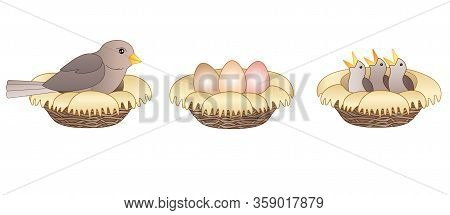 Set Stages Of Hatching Chicks. Three Pictures About The Process Of Hatching Chicks - A Bird Sits On