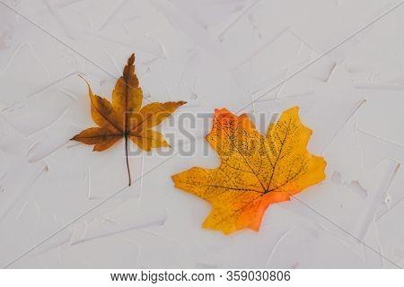 Real Vs Fake Concept, Real Autumn Maple Leaf Vs Plastic Replica