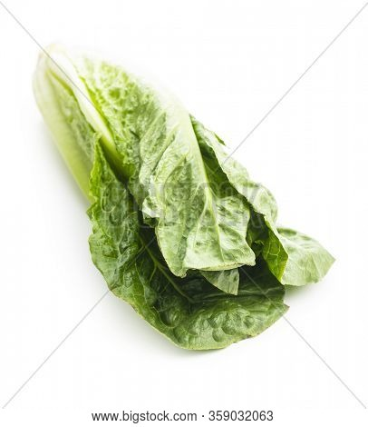 Fresh green Romaine Lettuce. Leaves of Lactuca sativa isolated on white background.