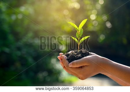 Tree Planting. Holding Small Green Tree Plant On Soil, Trees Growing Seedlings. Holding Tree On Natu