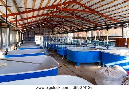 Pools For Breeding Sturgeon Fish On Fish Farm.
