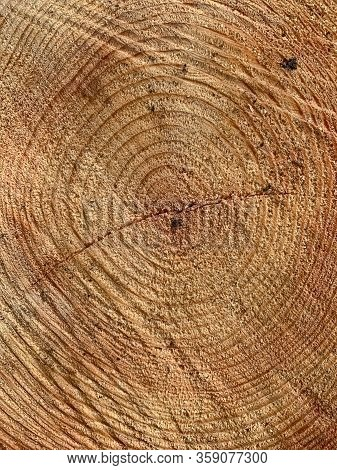 Wood Texture With The Cross Section Of A Cut Log. Stump Of Tree Sawed Log. Old Texture Saw Cuts Of T