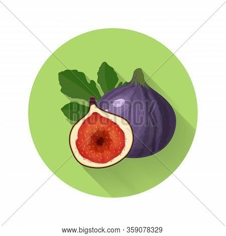 Fig Anjeer Vector Illustration. Fig Anjeer Icon. Fresh Healthy Food Organic Natural Food Isolated