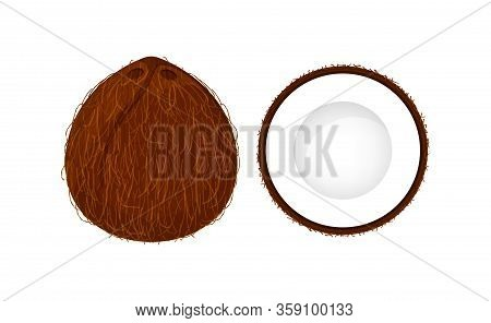 Coconut Brown Fruit And Half Cut Isolated On White Background, Illustration Coconut Brown Half Slice