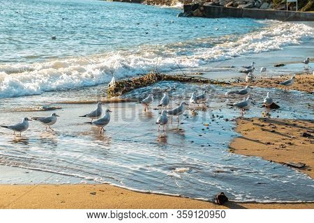 Group Of Seagulls Standing On The Sand Near The Sea Shore.