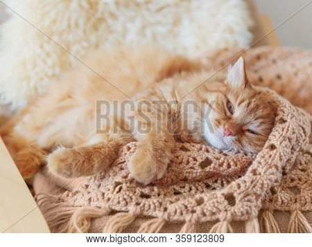 Cute Ginger Cat Sleeping On Pile Of Clothes. Fluffy Pet Mimics The Color Of Textile.