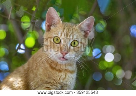 Cautious Young Cat With Bright Green Eyes.