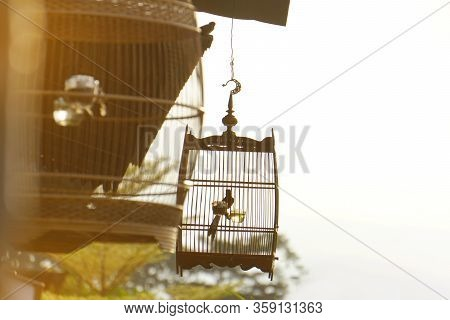 Bird cage in themorning light. Copy Space Freedom Concept