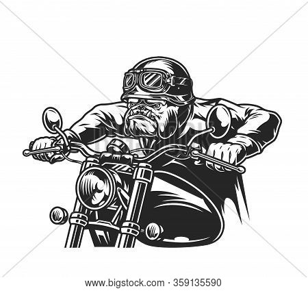 Vintage Ferocious Bulldog Head Biker In Helmet And Goggles Riding Motorcycle In Monochrome Style Iso