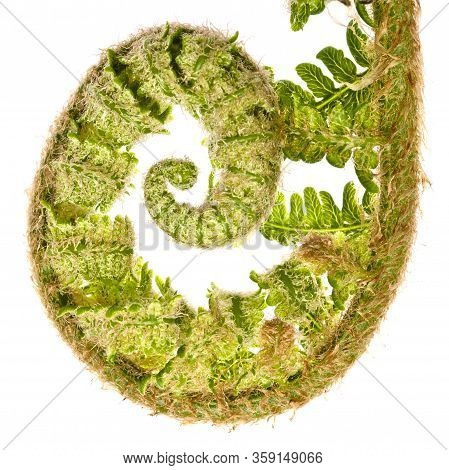 Natural Ferns Pattern. Beautiful Background Made With Young Green Fern Leaves. Beautiful Ferns Leave