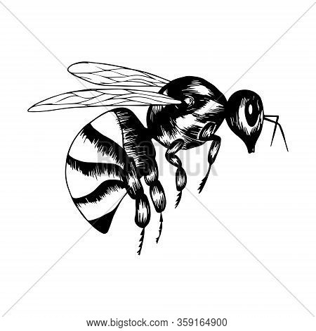 Wasp In Doodle Style. Black And White Vector Illustration. Insect Is Drawn By Hand And Isolated On A