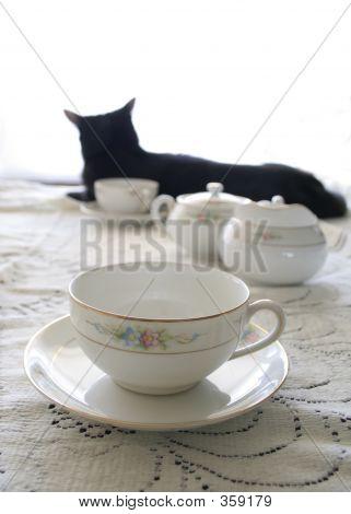 Teacup Kitty