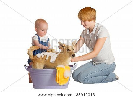 Dog Washing Isolated On White