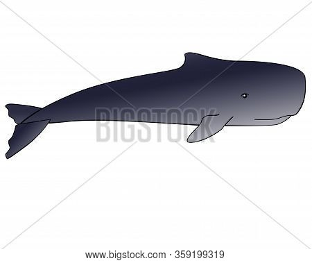 Whale. Sperm Whale - A Huge Animal From The Ocean - Vector Full Color Gradient Picture With Outline.
