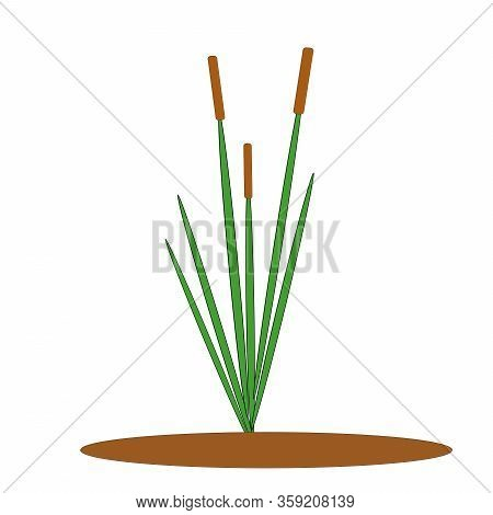 One Green Reed Bush With Brown Inflorescence, Single Element For Vector Design