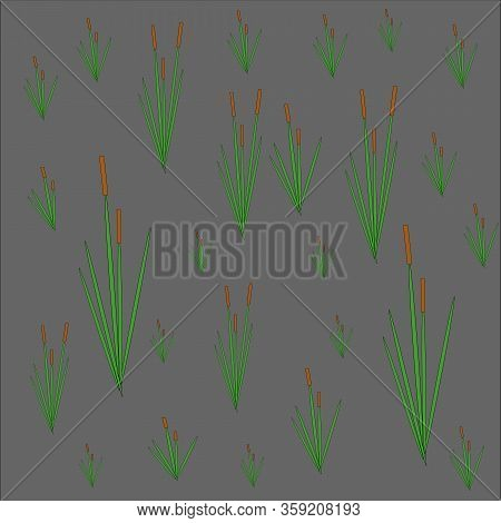 Green Reeds With A Brown Inflorescence On A Dark Gray Night Background, Pattern For Vector Design
