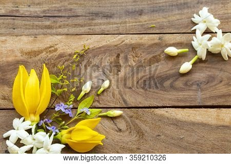 White Flower Jasmine, Yellow Flowers Ylang Ylang And Purple Flowers Local Flora Of Asia In Spring Se
