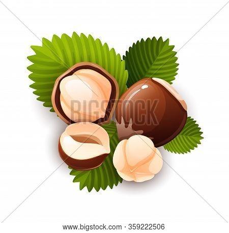 Hazel Nut Composition, Food Vector Isolated, Flat
