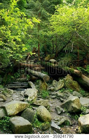 The Moss Covered Rocks And Fallen Trees An Ancient Woodland. Fallen Trees In The Woods Covered With