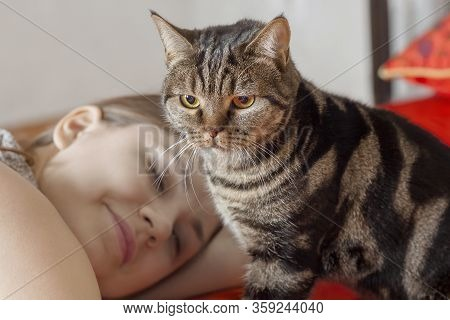 Cute British Short Hair Cat With Bright Yellow Eyes, Sitting On The Bed With Young Caucasian Woman O