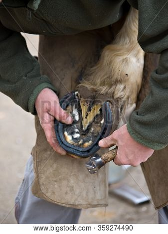 A Close Up Of A Farrier Putting A Shoe On The Hind Hoof Of A Horse.