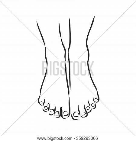 Human Woman Bared Feet Line Drawing. Vector Illustration Sketch