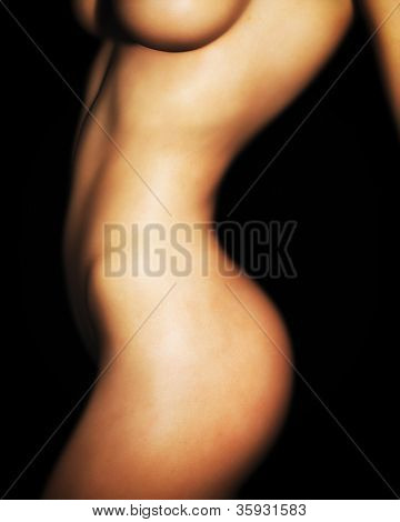 A photo-realistic illustration of a nude Caucasian female torso. poster
