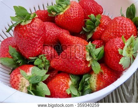 Freshly Washed Strawberries In A White Plastic Colander On An Old Wooden Textured Table. Succulent J