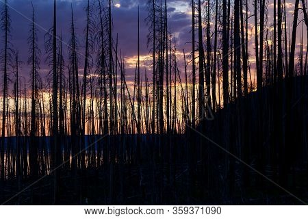 A Beautiful Sunset In The Distance Behind Dead Fire Burnt Trees Next To Yellowstone Lake At Yellowst