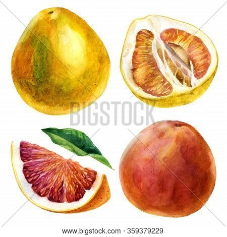 Watercolor Illustration. Set Of Citrus Fruits. Grapefruit. Grapefruit Fruit, Grapefruit Slice, Grape