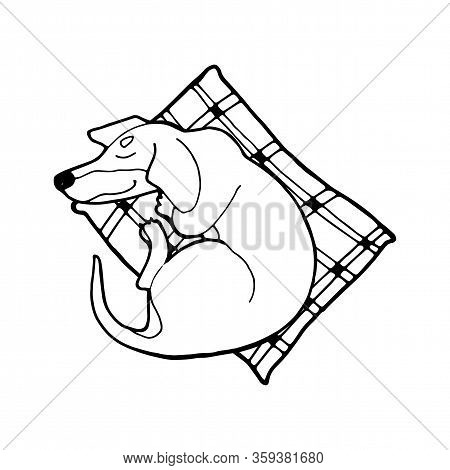 Dog Coloring Book Page. Illustration Of Cute Dog Dachshund. Nice Puppy For Greeting Card, Pet Shop O