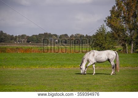 Young Horses Eating Grass At Field And Trees