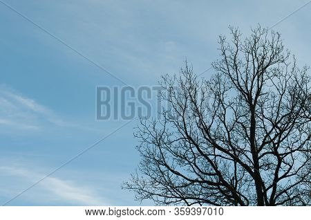 Leafless Branches At An Oak Tree In Front Of Blue Sky With White Cirrus Clouds