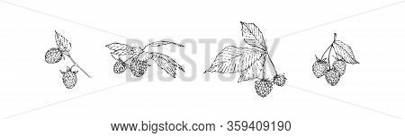 Hand Drawn Raspberry Branches Set With Berries And Leaves. Sketch Style Vector Illustration. Black I