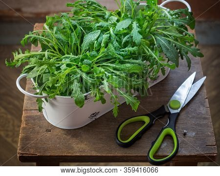 Arugula Growing With Metal Pots And Scissors And Scissors On A Old Stool