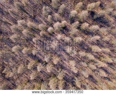 Beautiful Landscape With Forest Photographed From Drone. Polish Forest.