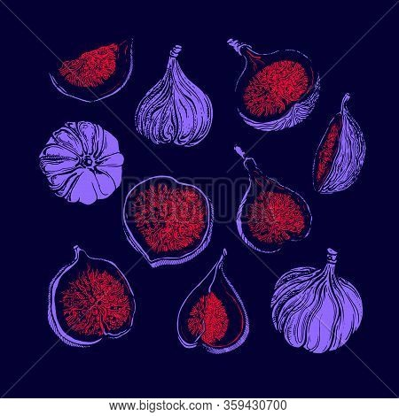 Fig Set. Vector Shape Of Fruit, Sliced Piece. Collection Isolated On Color Background. Art Hand Draw