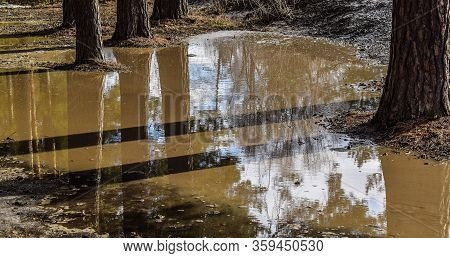 Forest After Rain. Reflection In A Puddle. Trees Stand In The Water. Big Puddle.