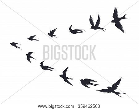 Flying Birds Flock Silhouette. Swallows, Sea Gull Or Marine Birds Isolated On White Background. Vect