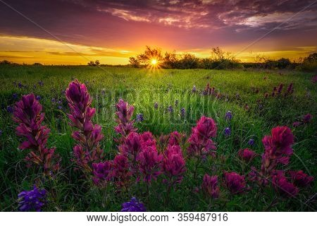 Rural Texas Bluebonnets And Indian Paintbrushes At Sunrise