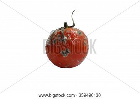 The Tomato Is Red Spoiled On A White Background. Spoiled Tomato. A Tomato With Mold. Rotten Tomato.