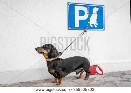 Cute Funny Dachshund Left Alone In Special Place For Pets Under The Sign Meaning
