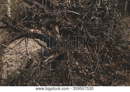 Dark Spooky Occult Pagan Witchcraft Ritual Legend Forest Roots Branches Texture. Photo Wallpaper Bac