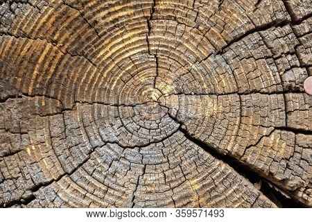 Cut End Of A Log Showing The Concentric Pattern Created By The Growth Rings. Wood Texture Of Cut Tre