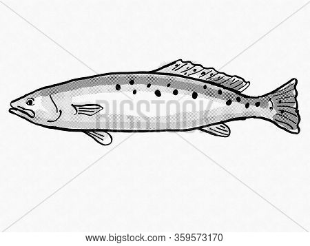 Retro Cartoon Style Drawing Of A Spotted Seatrout ,winter Trout Or Speckled Trout, A South Carolina