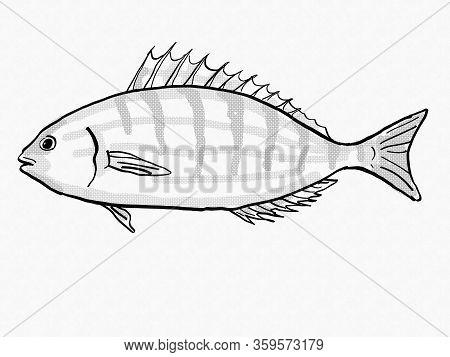 Retro Cartoon Style Drawing Of A Pinfish Or Sailors Choice, A South Carolina Inshore Saltwater Marin