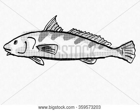 Retro Cartoon Style Drawing Of A Southern Kingfish Or Whiting , A South Carolina Inshore Saltwater M