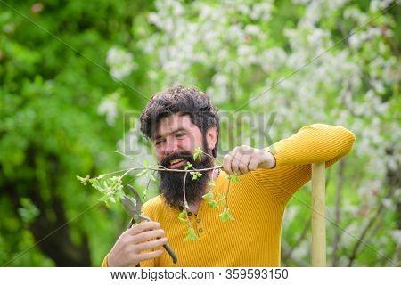 Gardening Scissors. Plants. Work In Garden. Bearded Gardener With Gardening Scissors. Work In Garden