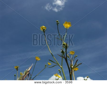 Yellow Flower Against The Sky