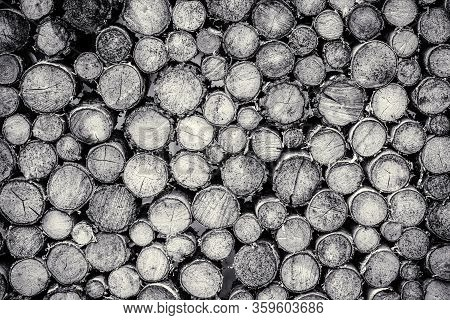 Tree Stumps Background. Pieces Of Teak Wood Stump Background. Round Teak Wood Stump. Round Teak Wood